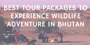 Best Tour Packages to Experience Wildlife Adventure in Bhutan